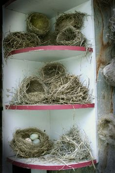 bird nest collection Mine are all in a glass cabinet Bird Nest Craft, Bird Nests, Nester, Bird Aviary, Displaying Collections, Bird Cage, Bird House Feeder, Diy Stuffed Animals, Beautiful Birds