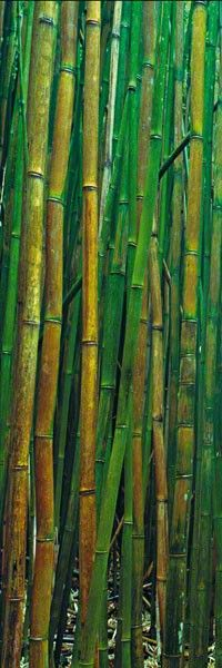 Bamboo Forest - Hana, Maui, Hawai'i © 2011 Peter Lik Fine Art Photography