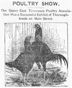 The comet. Agriculture Industry, Johnson City, January 14, East Tennessee, Main Street, Moose Art, Animals, Image, Animales