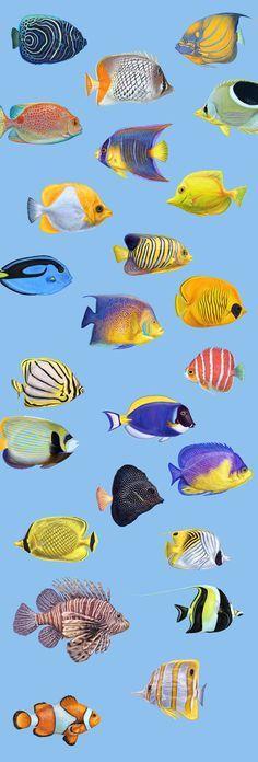 Tropical exotic fishes , #AD, #Zip#file#Adobe#Illustrator #Ad Colorful Fish, Tropical Fish, Ocean Drawing, Ocean Illustration, Underwater Painting, Fish Drawings, Angel Fish, Exotic Fish, Sea Fish