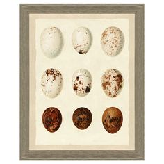 $140 I pinned this Egg II Framed Print from the Vintage Print event at Joss and Main!
