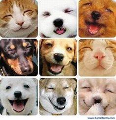 Maravilloso!!! Risas y animales, tendríamos tanto que aprender de ellos... Resu
