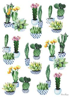 Fantastic Absolutely Free cactus plants dibujos Popular Succulents along with cacti would be the ideal residence decorations intended for minimalists plus movement s Succulents Drawing, Cactus Drawing, Cactus Art, Cactus Plants, Succulents Art, Cactus Doodle, Plant Illustration, Botanical Illustration, Colorful Flowers