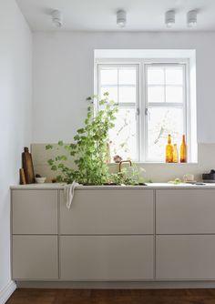 Fredag morgon | Växtkraft i köket