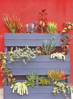 You can make with pallets DIY vertical garden planters with different flowers seed to have funky ornament of nature in your beloved garden. Cacti And Succulents, Planting Succulents, Planting Flowers, Succulent Landscaping, Succulent Arrangements, Landscaping Ideas, Jardin Vertical Diy, Vertical Gardens, Living Fence