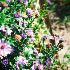 Octombrie in gradina - Ama Nicolae Salvia, Floral Wreath, Wreaths, Plant, Flower Crowns, Door Wreaths, Sage, Deco Mesh Wreaths, Garland