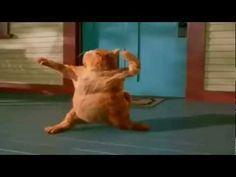Garfield Happy Birthday Dance - YouTube
