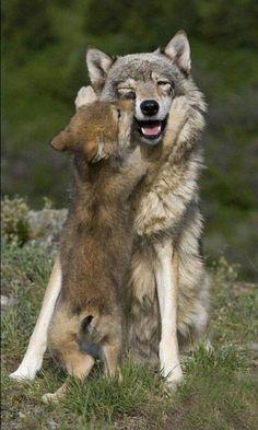 Щенки Чешского волчака