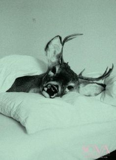 Günaydin..Olur da görüsemezsek iyi geceler.