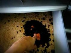 Guide to basic mealworm farm - YouTube