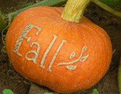 It's Written on the Wall: {Halloween & Thanksgiving} Writing messages on pumpkins-Scarring the pumpkin