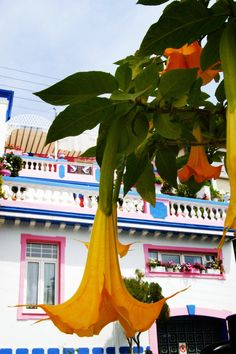 Colours of Kavala, Greece http://www.yourcruisesource.com/two_chefs_culinary_cruise_-_istanbul_to_athens_greek_isles_cruise.htm