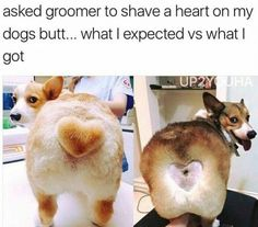 At least your dog looks happier than the other one. funny pics, funny gifs, funny videos, funny me Funny Animal Pictures, Funny Photos, Funny Animals, Cute Animals, Animals Dog, Pictures Of Dogs, Funniest Animals, Funniest Pictures, Animal Fun