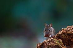 Tiere: Wilke Fotografie