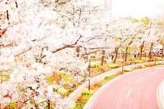 Image uploaded by iziz. Find images and videos about photography, pretty and pink on We Heart It - the app to get lost in what you love. Pink Love, Pretty In Pink, Tokyo Midtown, Planet Earth, Cherry Blossom, Find Image, We Heart It, Beautiful Pictures, Scenery
