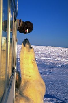 "Wildlife filmmaker Tristan Bayer goes nose to nose with the Lord of the Arctic. ""Polar Bear Stare"" Wins WIRED Arctic Photo Contest and is Published in UK's Daily Mail via"