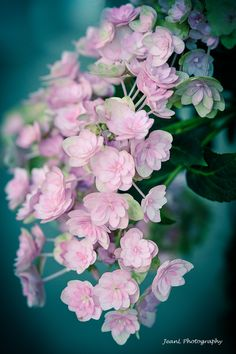 unknown pink flowers -LW ~~Secluded and gentle beauty by Jean Li~~
