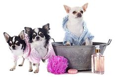 Trust the pet grooming experts in Dayton OH Big Times Kennel to give your favorite furry friend the royal treatment. Call Dogs and cats Cat Shampoo, Pet Grooming, Pet Store, Dog Care, Animals For Kids, Pet Dogs, Your Pet, Dog Lovers, Puppies