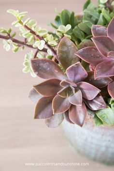 Try letting your succulents hang over the edge of the pot for more visual interest