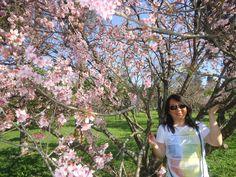 Parque do Carmo e Festival das Cerejeiras em Foco