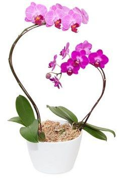 After Bloom Care for Orchids