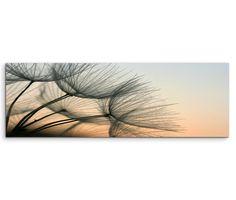 150x50cm Leinwandbild auf Keilrahmen Pusteblumen Abendlicht Nahaufnahme Wandbild auf Leinwand als Panorama