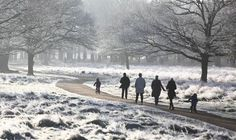 Walkers in Richmond Park, south west London, on 29 December Richmond Upon Thames, Richmond Park, Old London, West London, Bbc Weather, My Little Corner, Cold Day, Surrey, Places To Visit