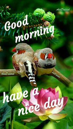 Gud Morning Images, Good Morning Msg, Good Morning Beautiful Images, Good Morning Picture, Morning Pictures, Good Morning Quotes, Beautiful Sunset, Morning Greetings Quotes, Morning Messages