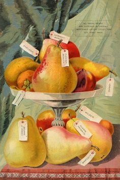 ART & ARTISTS: Vintage Seed Catalogues - part 3