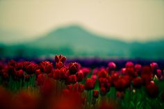 Vintage flowers red photography - inspiring picture on Favim . Just Girly Things, Things To Do, Lovely Things, Best Friend Bucket List, Bucket List Before I Die, Out Of Touch, Summer Bucket Lists, Fun Bucket, Favim