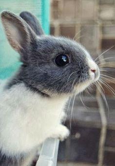 Cute gray wabbit