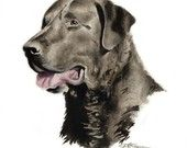 CHESAPEAKE BAY RETRIEVER Dog Art Print Signed by Artist D J Rogers