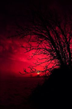Beauty of nature Red Aesthetic, Aesthetic Grunge, Aesthetic Pictures, Color Of Life, Red Riding Hood, Shades Of Red, My Favorite Color, Aesthetic Wallpapers, Red Color
