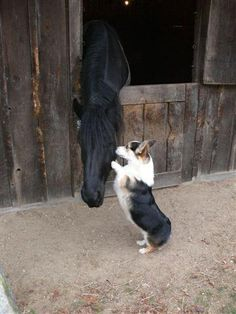 Dog up on his hind feet loving on his horse, how sweet!