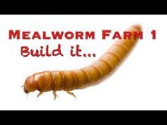 Mealworm Farm 1 - (Build It) - YouTube