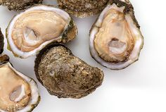OYSTERS! Learn about oyster season in Louisiana, how to prep them, recipes and more! #seafood #recipes #oysters #louisiana