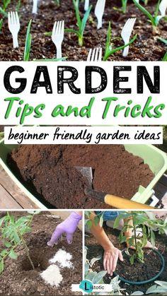 Vegetable Garden Tips, Veg Garden, Planting Vegetables, Growing Vegetables, Rain Garden, Garden Plants, Veggies, Growing Gardens, Growing Plants