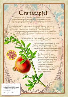 Pictures from the book Old Medicinal Herbs Drawings Healing Herbs, Medicinal Herbs, Best Fish For Aquaponics, Indoor Aquaponics, Types Of Flowers, Herbal Medicine, Organic Recipes, Pomegranate, Garden Plants