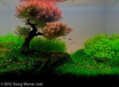 Lovely example of aquascaping. A subject in which I would like to educate myself further. I would like to utilize a similar idea with edible plants and edible fish for the large aquarium I plan to have in my future home.