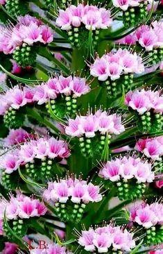 Fotoğraf Unusual Flowers, Amazing Flowers, Pink Flowers, Beautiful Flowers, Wild Flower Meadow, Belle Plante, Flower Backgrounds, Flower Power, Planting Flowers