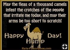 Funny hy wednesday hump day funny hy hump day quotes memes quotes to help you get through hump day funny Hump Day Humor, Tuesday Humor, Monday Humor, Morning Humor, Good Morning Quotes, Taco Tuesday, Girlfriend Humor, Boyfriend Humor, Sister Humor