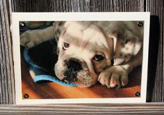 Bulldog Puppy in Shadows Blank Note Card Animal by HBBeanstalk, $3.00