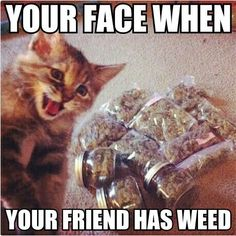8 Reasons Why Cats Are Basically Reincarnated Stoners | StonerMotivation.com