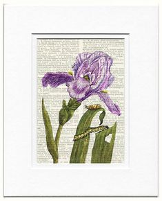 Iris dictionary print by FauxKiss on Etsy