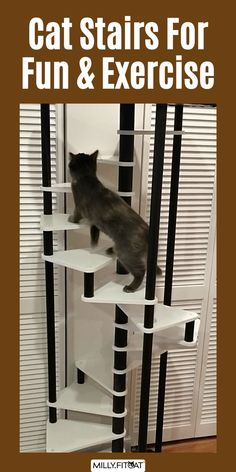 Best cat exercise and fitness for kitty. This is the MillyFitcat Spiral Cat Tree, designed for active cats. The Cat Stairs lead up to a cushy Cat Bed on top. The unique design of this Cat Furniture creation makes it fun for kitty to climb as well as interesting to watch the action also. The best Cat Tree idea is the one that holds your pet's interest. Click or Claw over to our Etsy Shop for a full description and available sizes. Meow! #cattower #cattree #cattreetower #catfurniture Cool Cat Trees, Cool Cats, Cat Stairs, Cat Exercise, Cat Activity, Happy Animals, Cat Furniture, Fun Workouts, Kitty