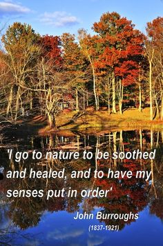 'I go to nature to be soothed and healed, and to have my senses put in order' John Burroughs (1837-1921)