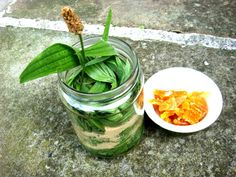 Anna Christensen on Skin Care: Granny's Plantain Cough Syrup. Cough Syrup, Healing Herbs, Kraut, Health And Nutrition, Healthy Habits, Pickles, Natural Remedies, Cucumber, Herbalism