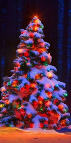 Charming outdoor christmas tree decorations you should try this year 33 Christmas Scenes, Noel Christmas, Christmas Pictures, Winter Christmas, Christmas Lights, Xmas, Outdoor Christmas Tree Decorations, Beautiful Christmas Trees, Christmas Aesthetic