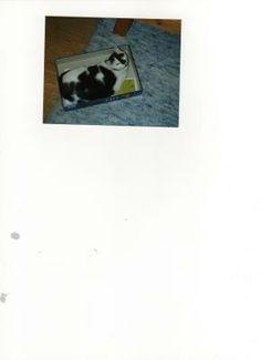 My old cat Lissy - already in cat's heaven