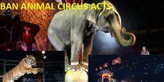 Fédération Mondiale du Cirque : ban all animal circus acts